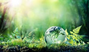 Green grass in the forest with a reflective earth globe on the ground.